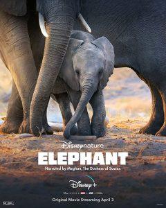 ดูหนังออนไลน์ HD ดูสารคดี ELEPHANT (2020) DISNEY อัศจรรย์ชีวิตของช้าง HD ดูฟรี เต็มเรื่อง Master ดูสารคดีออนไลน์